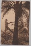Kamerun, 1905 (?), Mi.- Nr.: 21, als EF auf Bildpostkarte (Palmenkletternder Afrikaner) von Duala nach Iburg